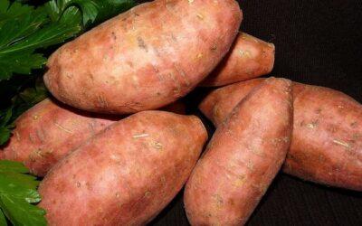 Sweet Potatoes with Coconut Milk